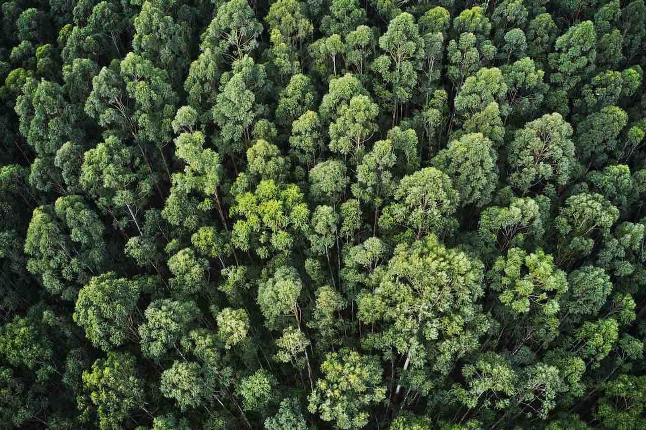 As boas práticas ambientais das empresas ESG